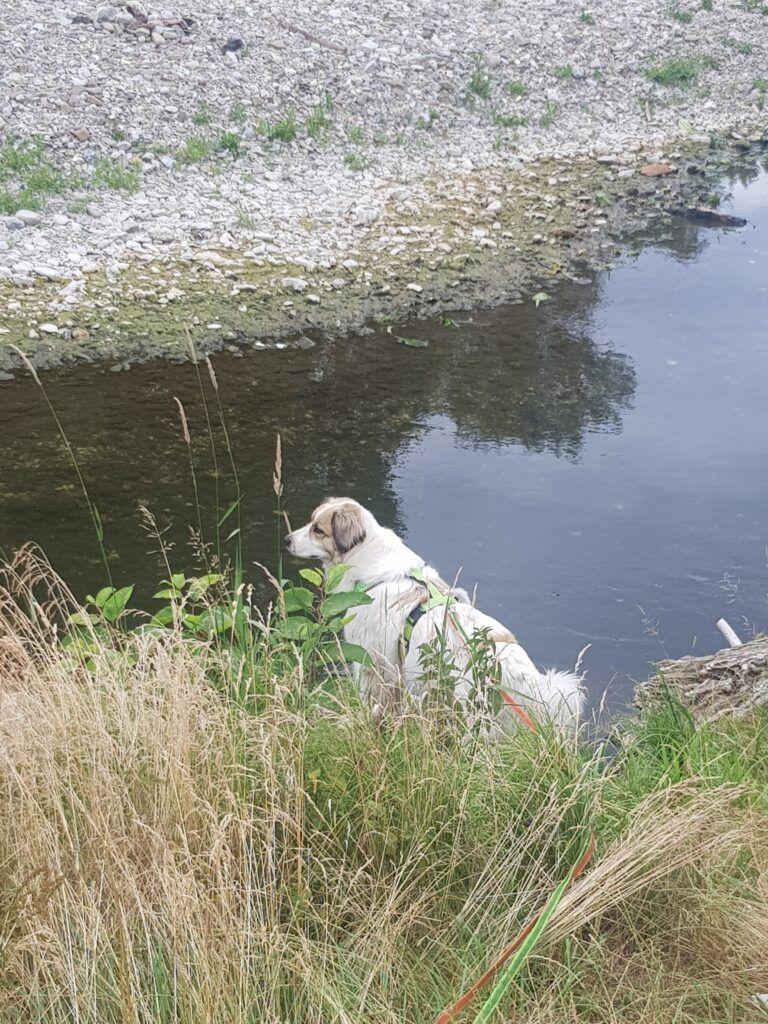 Therapiehund ASO Traiskirchen